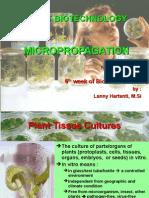 PLANT B Micropropagation