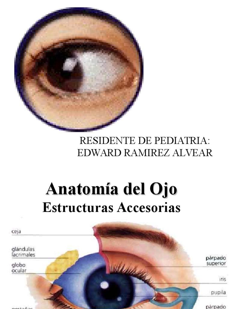 Magnífico La Anatomía Y La Fisiología Ocular Regalo - Imágenes de ...