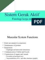 1. Sistem Gerak Aktif (Otot)
