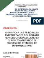 Semana 11 Cuidados de Enfermeria en Patologias Del Aparato Reproductor Masculino Epididimitis CA Testiculo y Afecciones Del Pene
