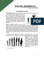 Etapas_desarrollo