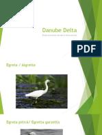 Birds in Danube Delta