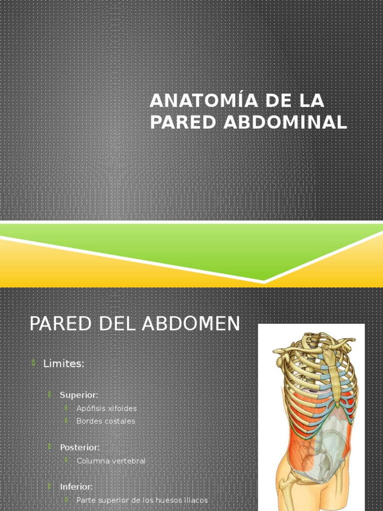 Anatomia-capas Musculares Abdominal