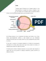 defectos opticos.docx
