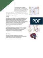 Elementos del Sistema Nervioso
