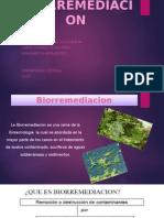 BIORREMEDIACION total.pptx
