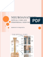 Neuroanatomy Pns 2013