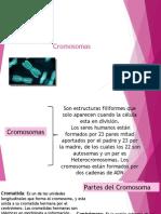 Clasificacion y Estructuras Cromosomas 2