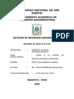 DISEÑO DE MONOGRAFICO