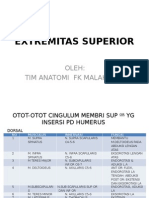 Anatomi Extremitas Superior
