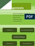 Embriogenesis Tugas Kelompok