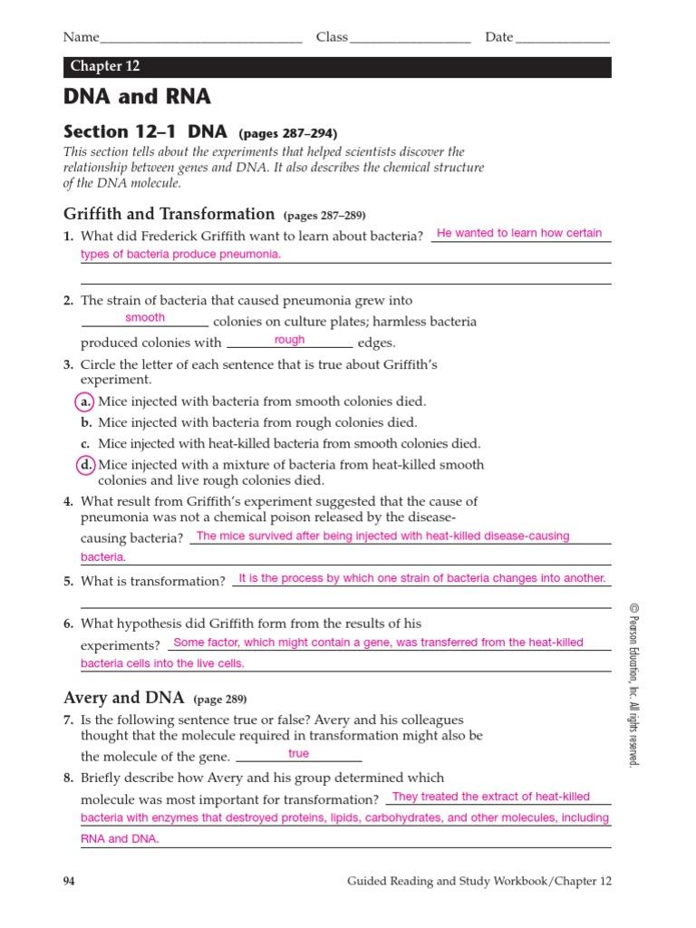 worksheet. Dna And Rna Worksheet Answers. Grass Fedjp Worksheet ...