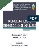 Fungos Micorrízicos Arbusculares