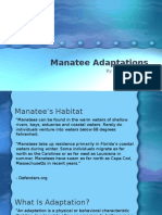 manatee adaptations powerpoint