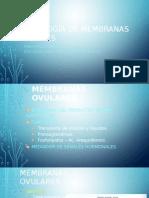 Patología de Membranas Ovulares