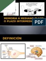 fisio-2