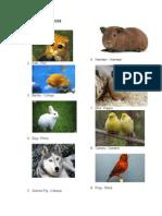 Animales Domesticos y Salvajes en Ingles y Español