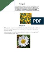 Plantas Español