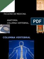 Columna Vertebral1