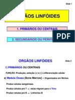Órgãos Linfoides Primários e Secundários