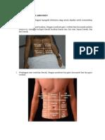 Topografi Anatomi Abdomen