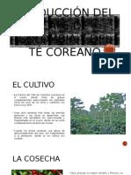 Producción Del Café de Colombia y Del Té