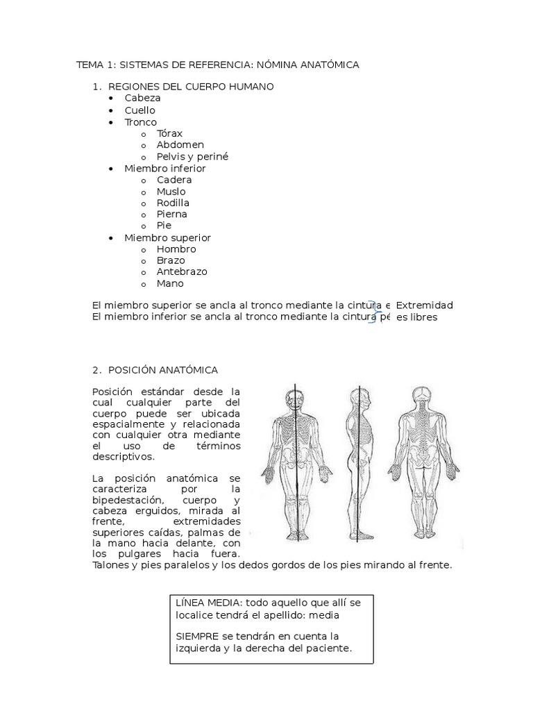 Tema 1 Anatomia. Medicina