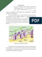 Estudo dirigido farmacocinética.pdf