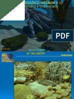 FGP AP PaleozoicoInferior2