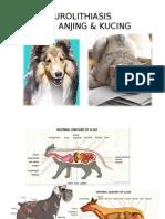 Urolithiasis ,Lutd Pd Anj&Kuc