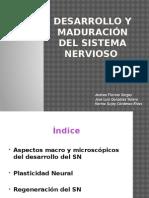 Desarrollo y Maduracin Del Sistema Nervioso