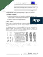 Practica 3 Fracturas (1)