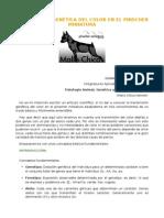 TRANSMISION GENÉTICA DEL COLOR EN EL PINSCHER MINIATURA