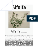 Alfalfa planta aromatica