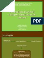 seminário_conservaçao