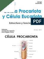 Célula Procariota y Célula Eucariota