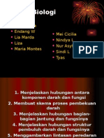 Sistem Peredaran Darah Manusia