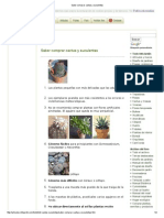Saber Comprar Cactus y Suculentas