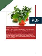 Plante Cu Efecte Toxice[1].1