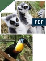 Imagenes de Especies Endemicas