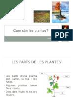 T4 Com Són Les Plantes 1