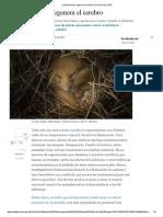La Hibernación Regenera El Cerebro _ Ciencia _ EL PAÍS