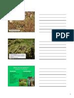 Bryophytes.pdf