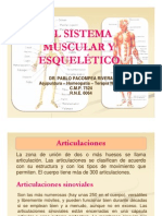 Clase 2. El Sistema Muscular Esqueletico