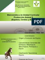 Clase I, Componente Equinos (Origen, Evolución y Usos de Los Equinos).