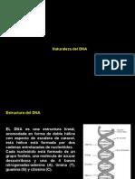 1.Naturaleza DNA