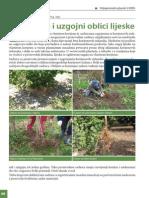 Sorte i Uzgojni Oblici Lijeske (1)