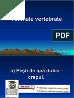 lectie_19_animale_vertebrate._pesti_de_apa_dulce_crapul..ppt