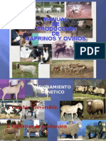 Manual de Produccion de Caprinos