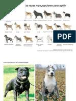 Razas de Perro Que Se Quierern Prohibir